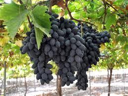 uva negra - Alimentos para combatir el acné