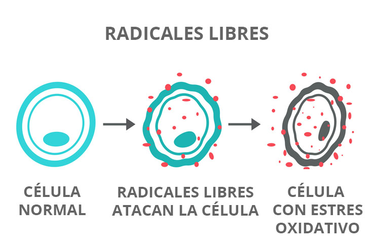 Radicales libres - Antioxidantes en dieta alimenticia